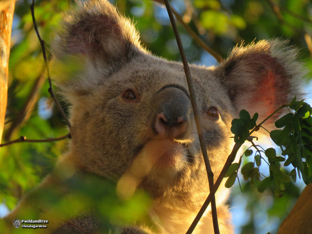 Ryder by koalagardens