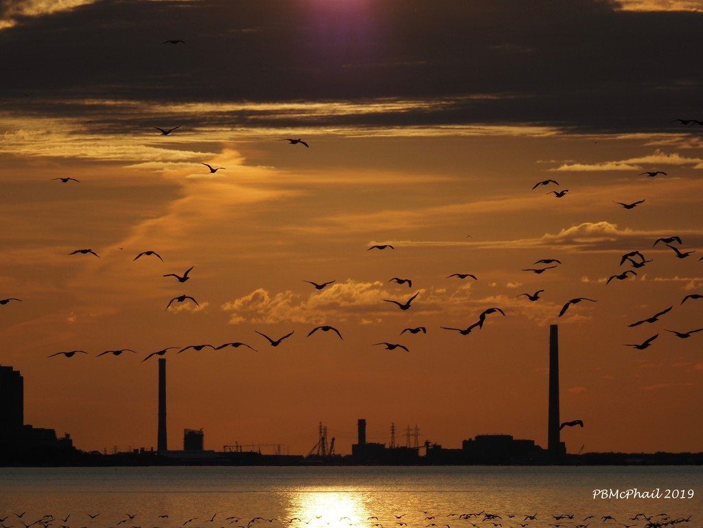 Birds on the Wing by selkie