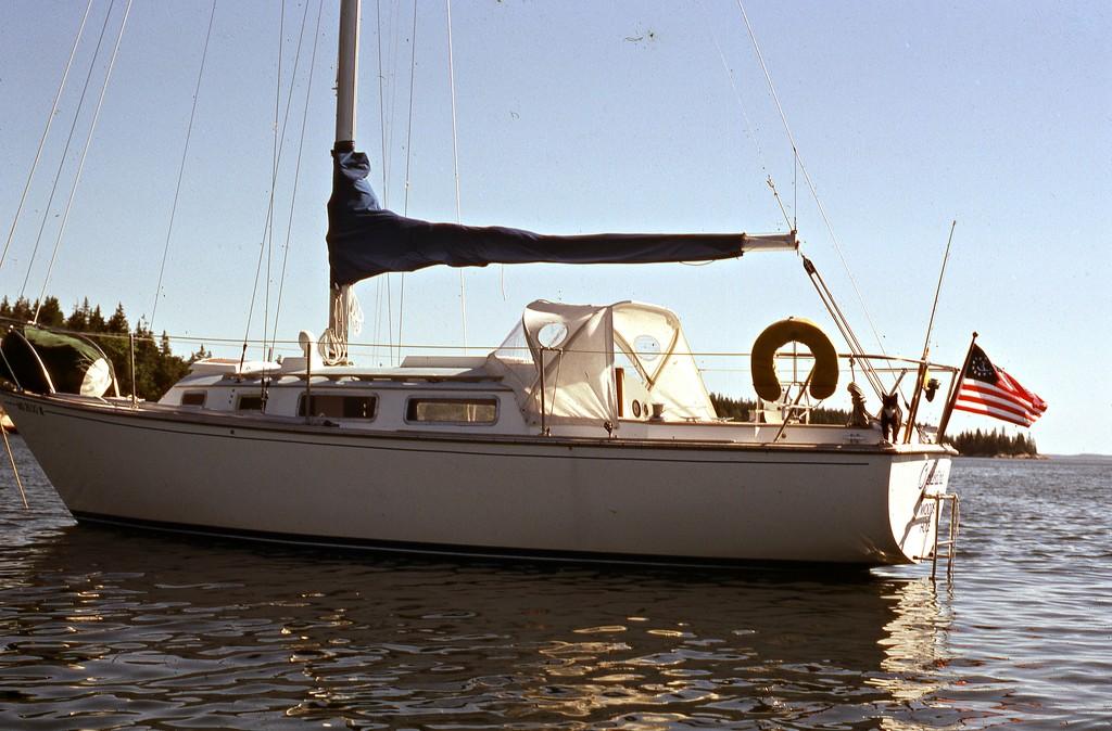Boat cat Series #8 by sailingmusic