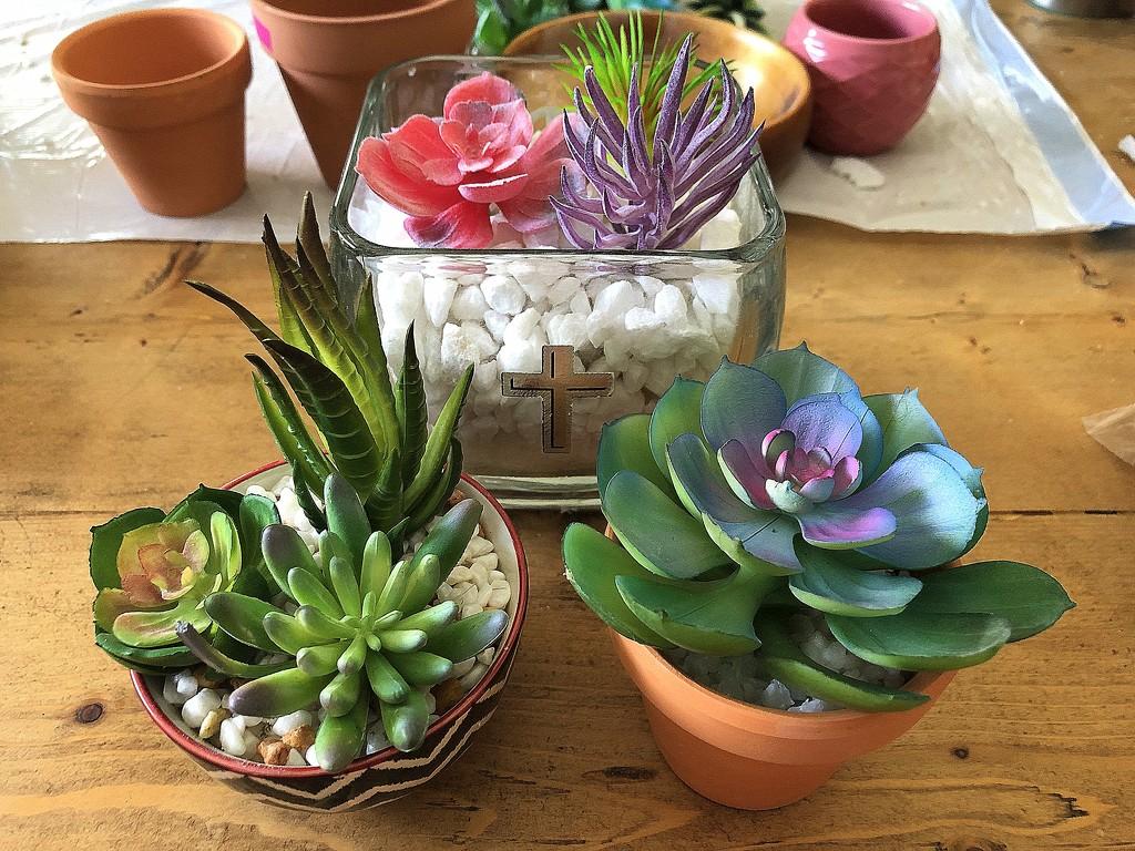 Succulents by homeschoolmom