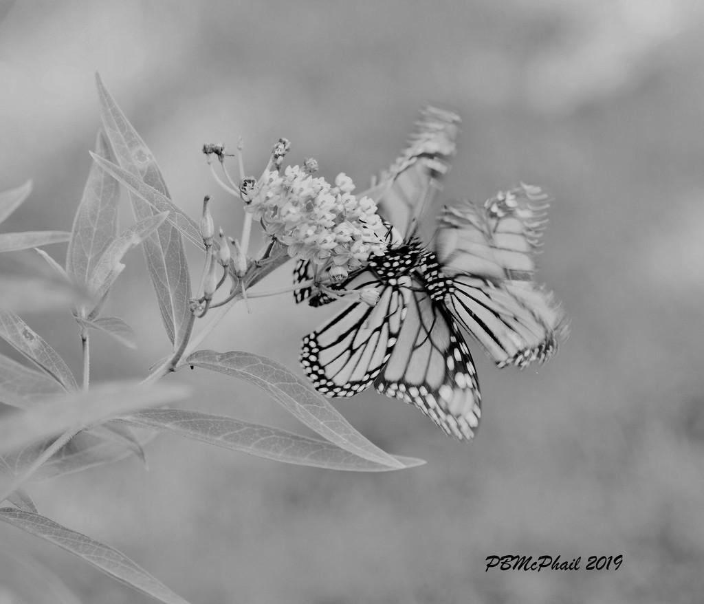 Butterfly Dance by selkie