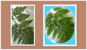 13th Aug 2019 - Fern pattern and pixilated fern design.