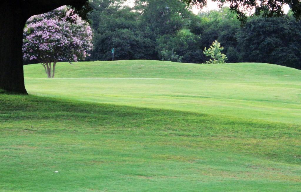 Golf course landscape by dmdfday