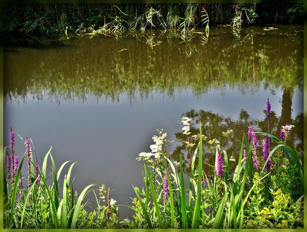 Down by the waterside by gijsje