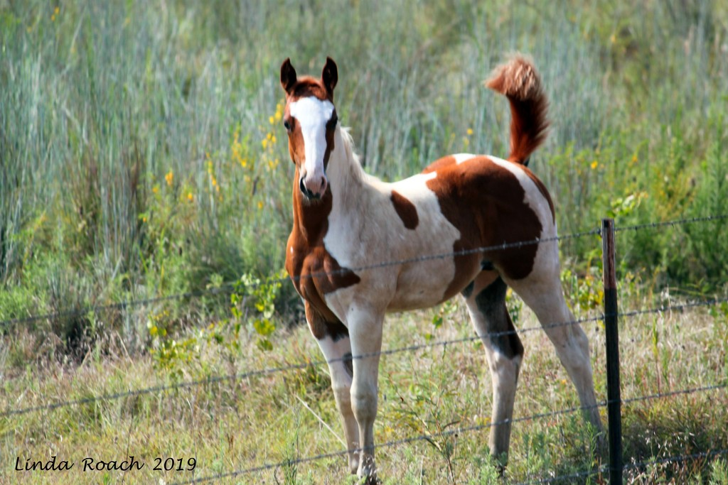 Proud 2 Months Old Filly by grannysue