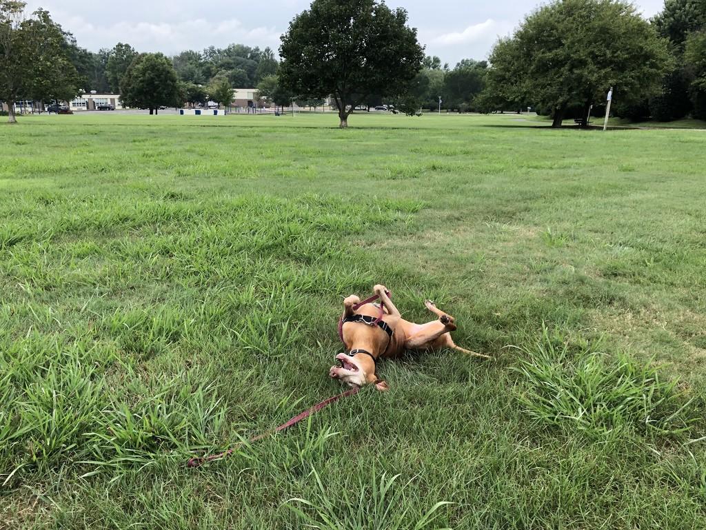 Happy Dog by loweygrace