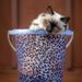 A Bucket Load