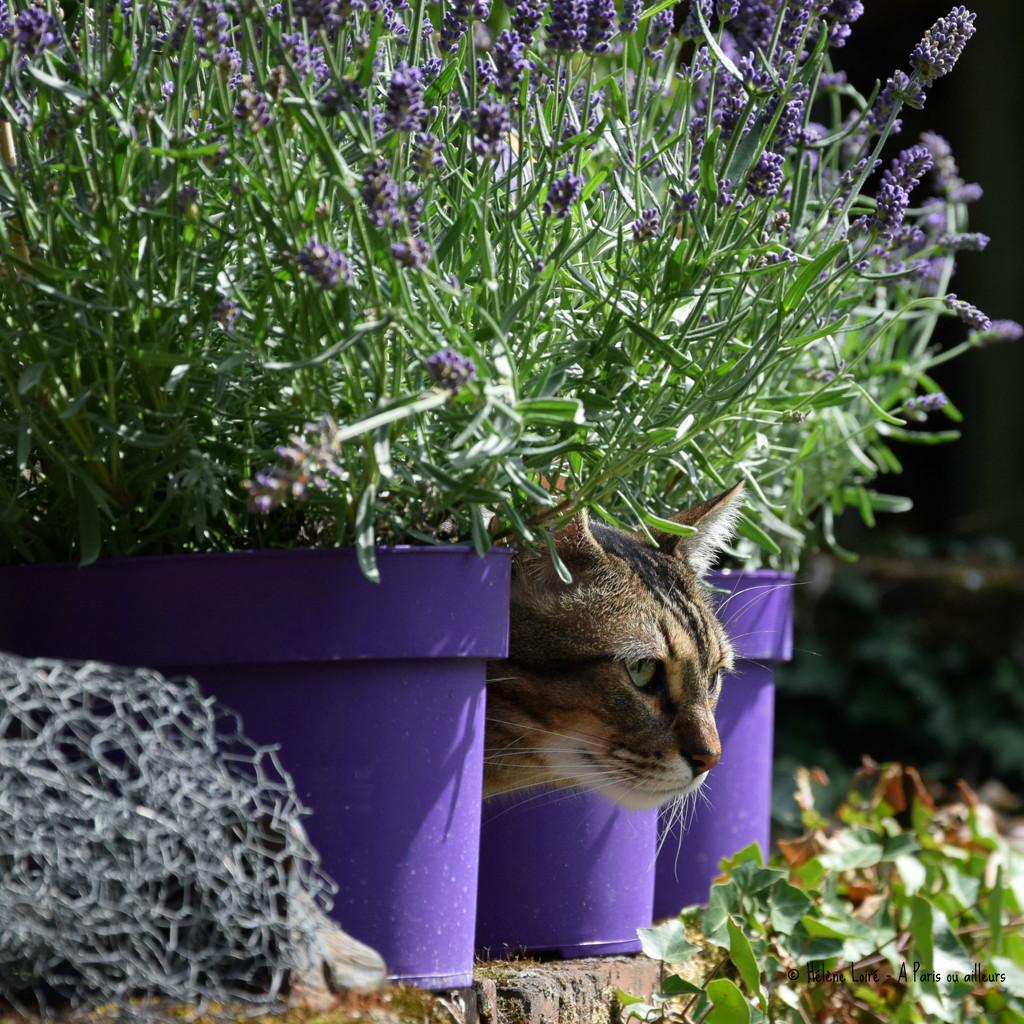 the cat who smells good by parisouailleurs