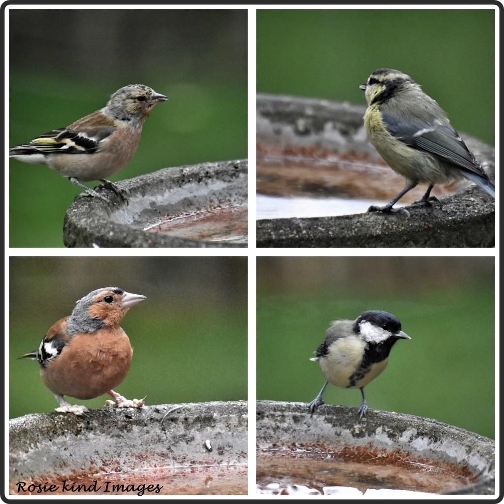 Bird bath birds  by rosiekind
