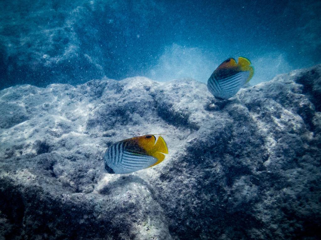 Underwater photo try by nicoleweg