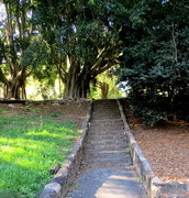 15th Aug 2019 - Steps up to the trees with the hanging roots