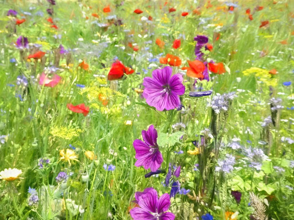 Wildflowers by ludwigsdiana