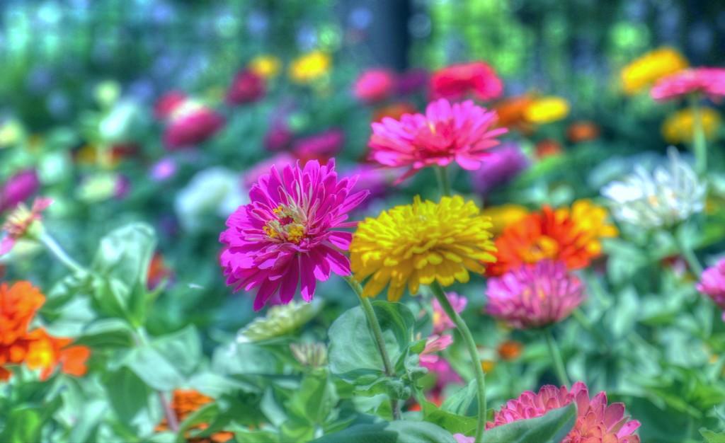 Flower Garden by lynnz
