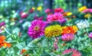 13th Aug 2019 - Flower Garden