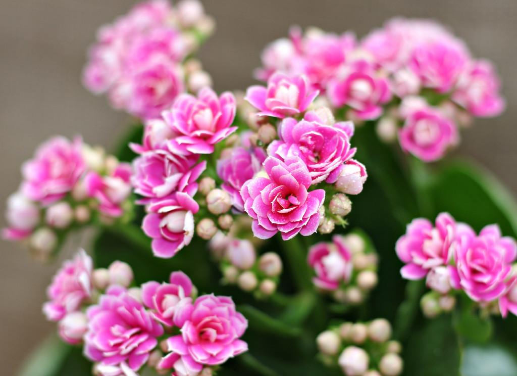 Little  Flowers  by wendyfrost