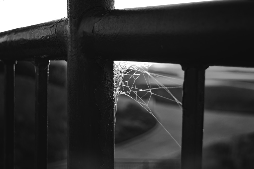 Webs by space319