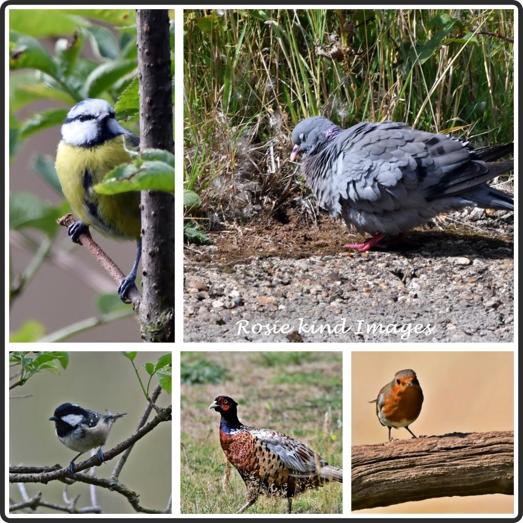 RSPB Birds by rosiekind