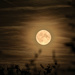 Back garden moon