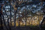 16th Aug 2019 - evening bush-scape