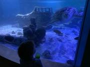 14th Aug 2019 - At the Aquarium