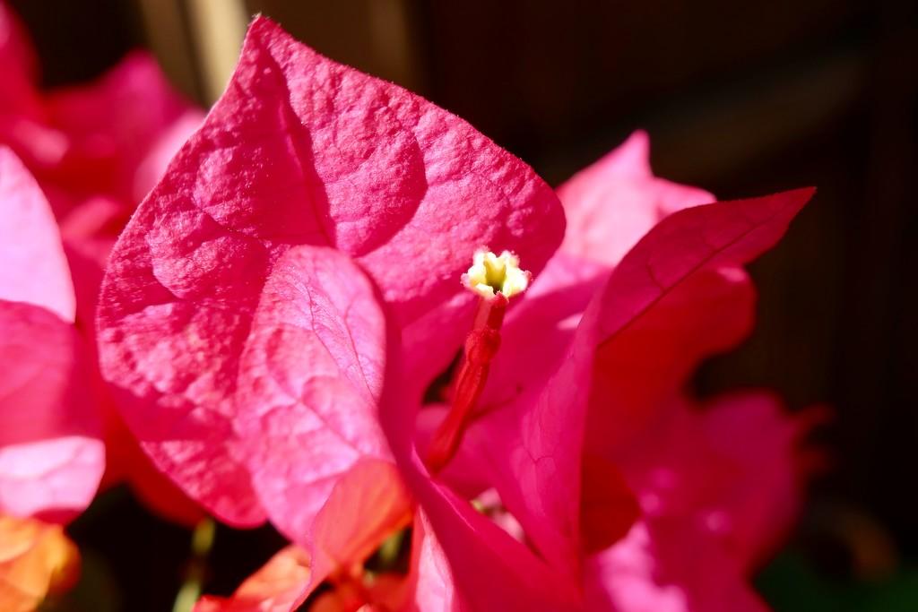 """""""Three simple waxy flowers"""" by louannwarren"""