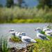Seagulls enjoying a sunny day!