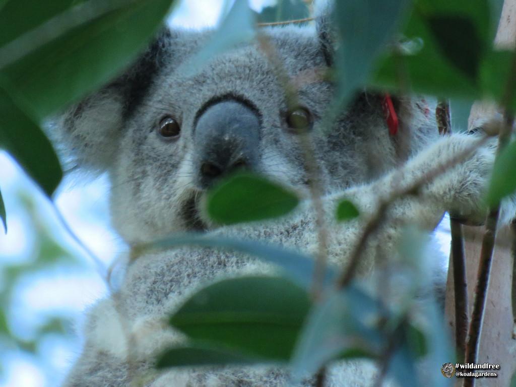 eye spy with my little eye ... by koalagardens