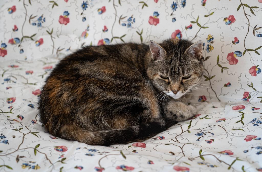 Floral cat... by vignouse