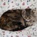 Floral cat...
