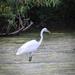 Egret on Hallowell Lake