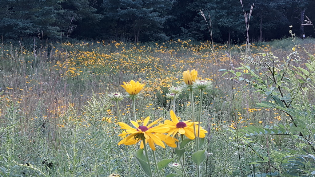 Field of Flowers by julie