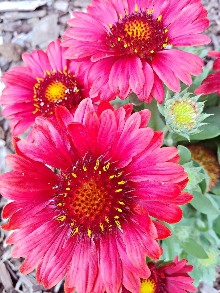 New Flowers In The Flower Garden  by jo38