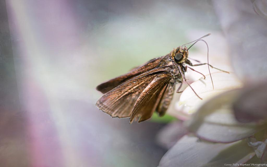 Moth on a Flower by taffy