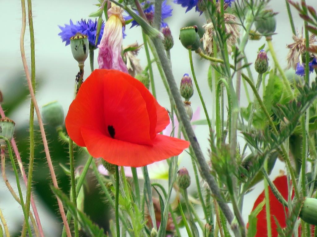 Small Garden by seattlite