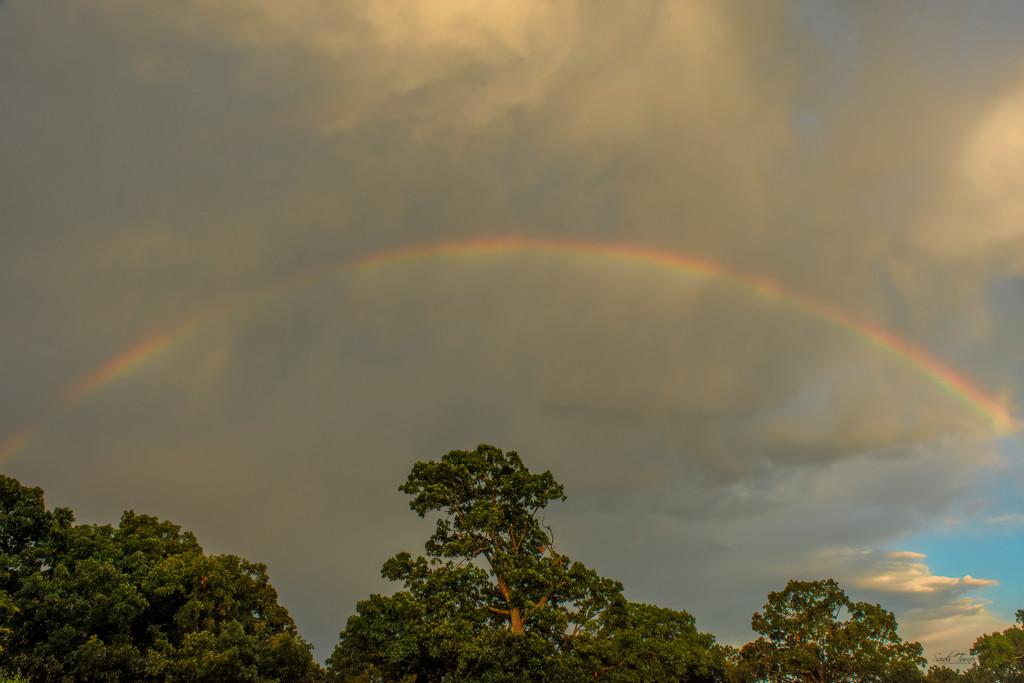 Rainbow Promise by samae
