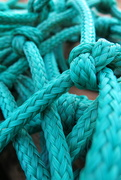 17th Aug 2019 - Lots of knots