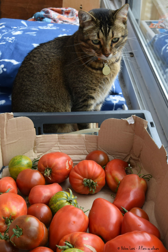 so, you bought tomatoes! by parisouailleurs