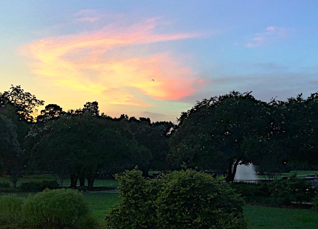 Sunset at Hampton Park, Charleston by congaree