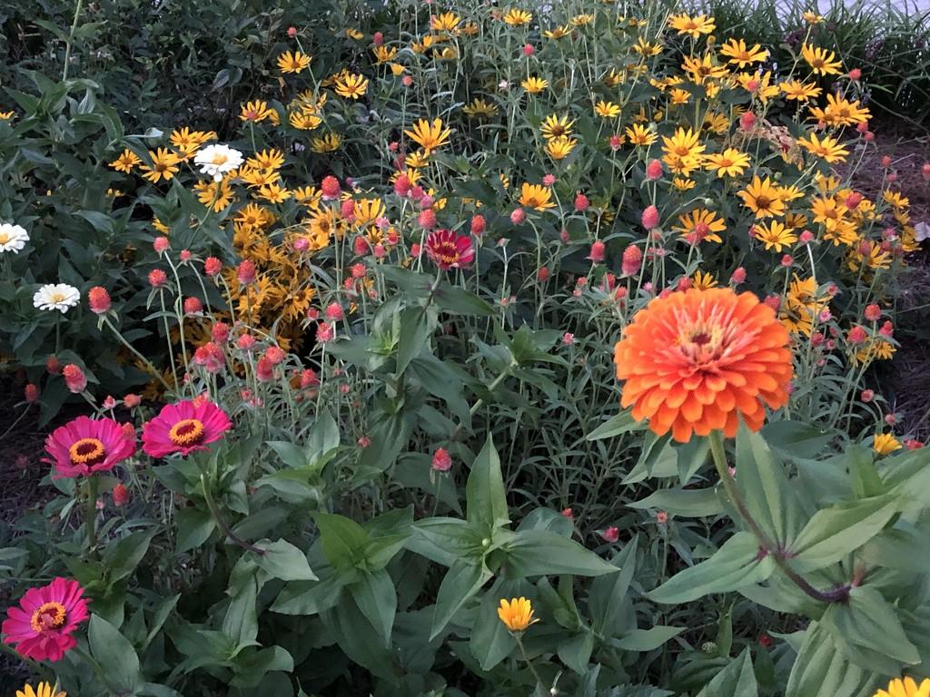 The gardens at Hampton Park, Charleston. by congaree