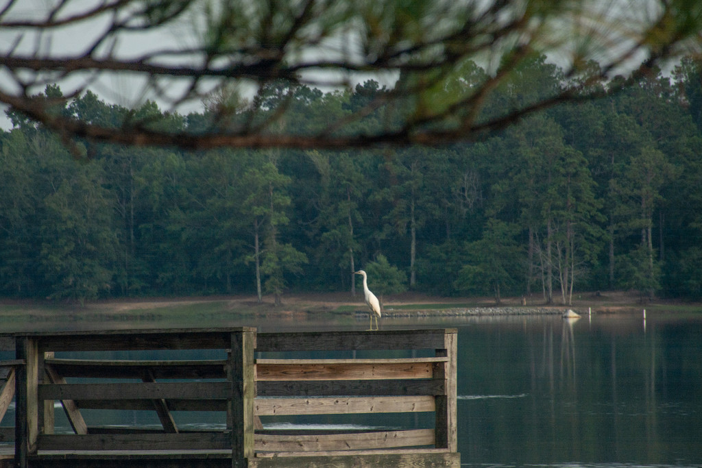 Egret... by thewatersphotos