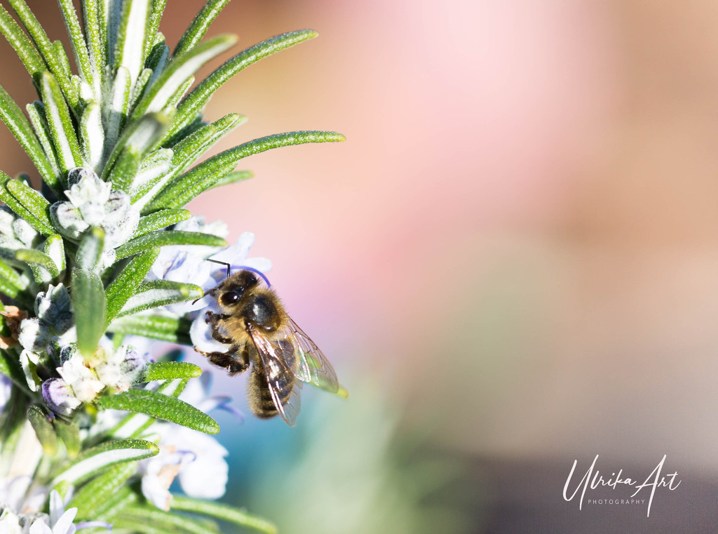 busy bee  by ulla