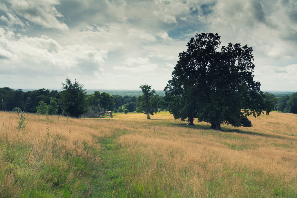 A view from the Surrey Hills by rumpelstiltskin