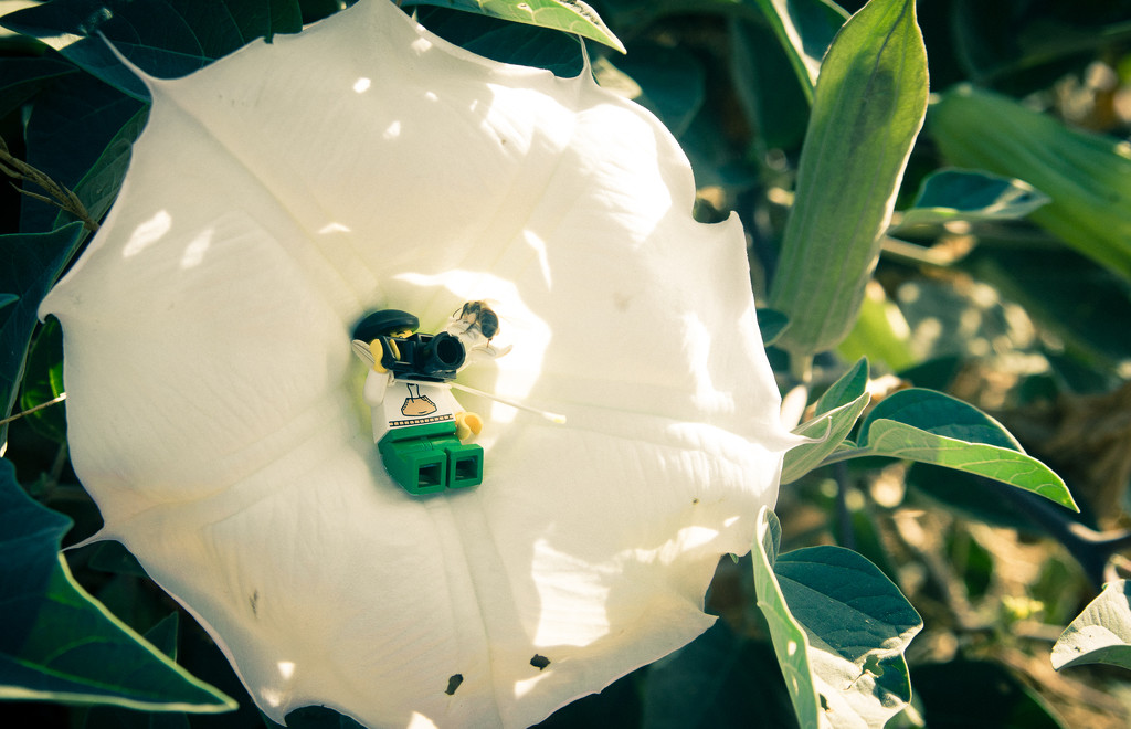 (Day 185) - Bee Brave by cjphoto