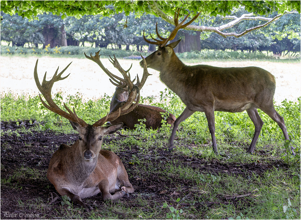 In the shade by pcoulson