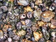 18th Aug 2019 - Shells