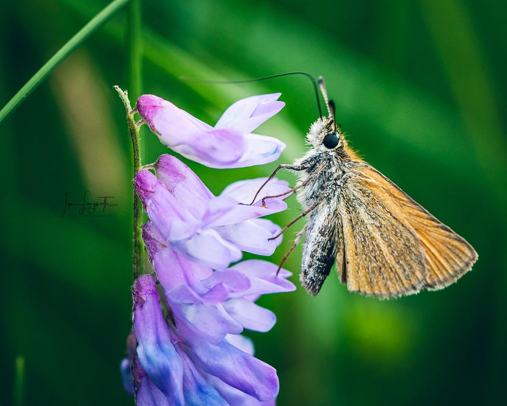 ...in the hay field by shutterbugger
