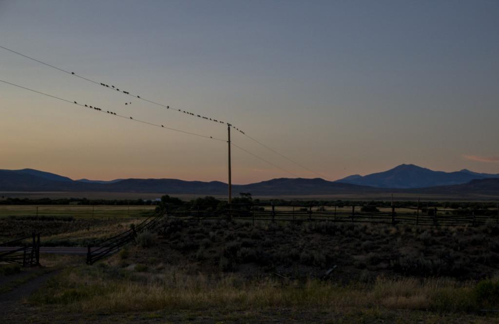 Birds on a Wire by jetr