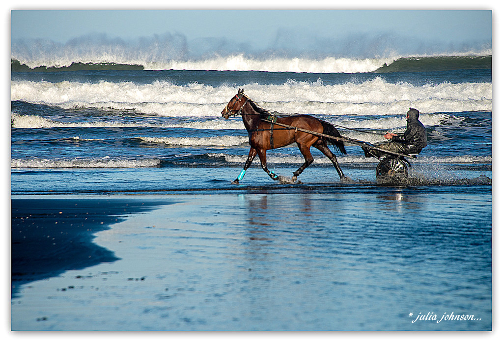 Training the Trotters.. by julzmaioro