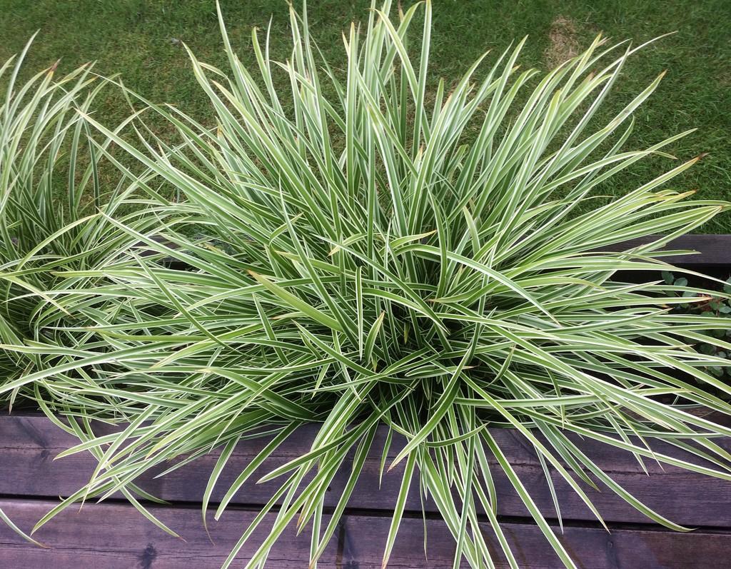 Grass by huvesaker