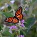 Grandma's Butterfly by genealogygenie